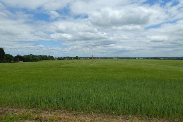 Barley south of South Milford