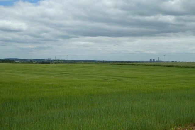 Barley north of Lumby
