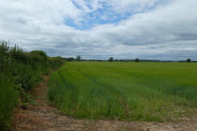 Field west of Butts Lane