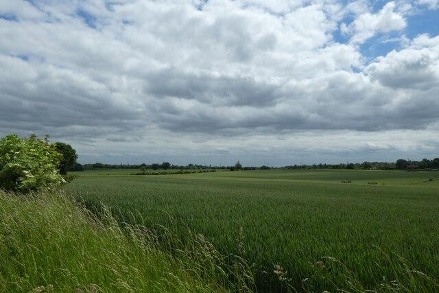Field beside Old Quarry Lane