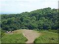 SO7638 : Enjoying a Saturday afternoon in the Malvern Hills by Chris Allen