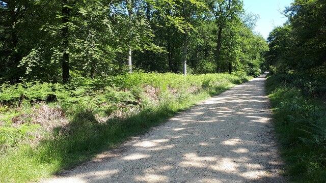 Straight track in Busketts Lawn Inclosure