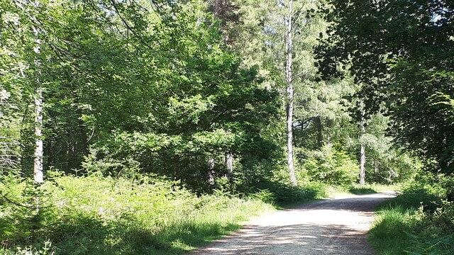 Sunny track in Lodgehill Inclosure
