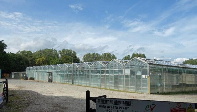 Glasshouses at Sholden