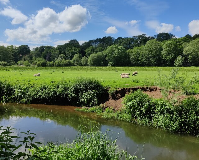 Sheep next to the River Stour at Wolverley