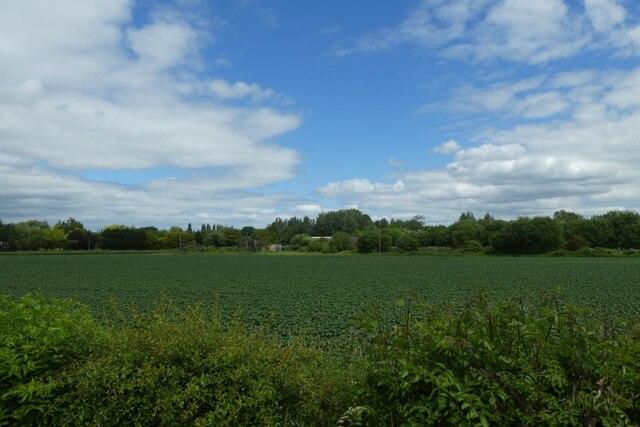Farmland beside the railway by DS Pugh