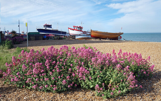 Flowers and Boats, Deal Beach