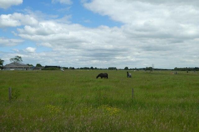 Horses beside Austfield Lane