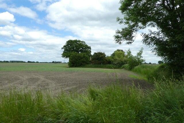 Field from Austfield Lane