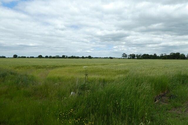 Farmland north of Hillam Common Lane