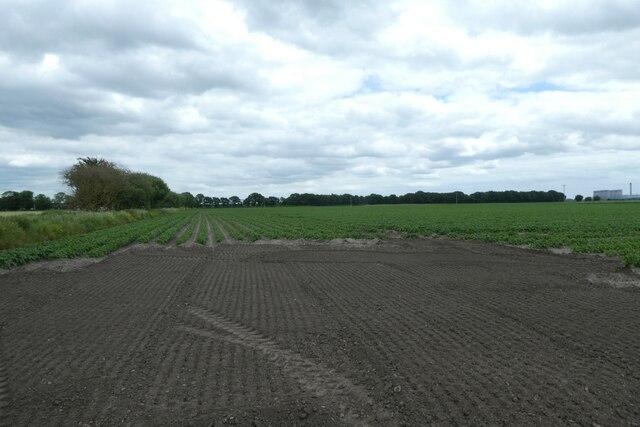 Potato fields beside Hillam Common Lane