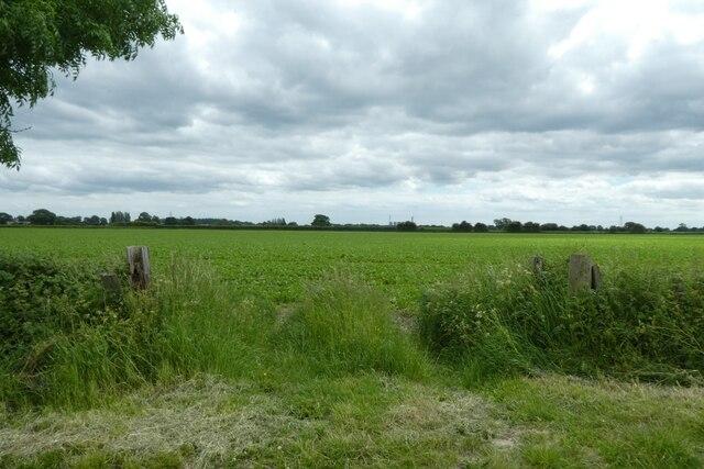Fields beside Common Lane