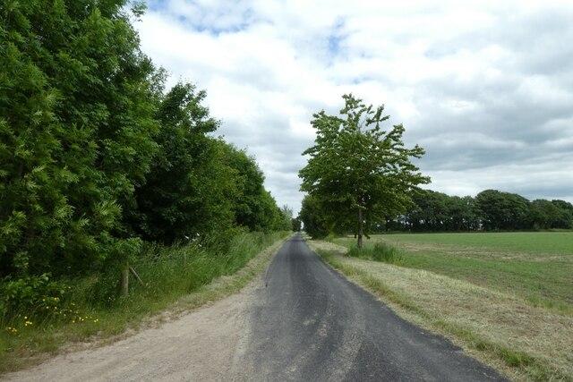 Common Lane near a farm track