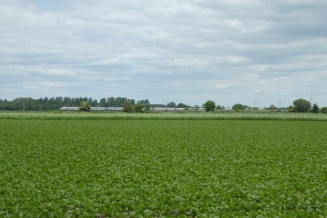 Farmland from Common Lane