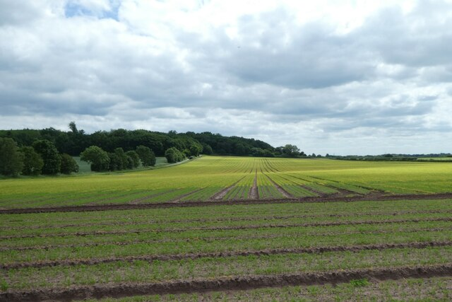 Farmland beside Haugh Lane