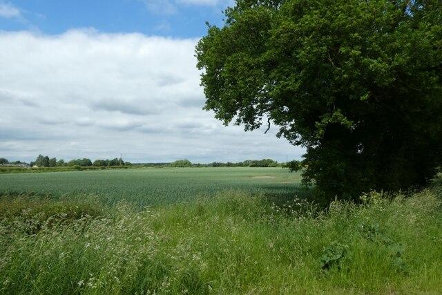 Farmland beside Morrets Lane
