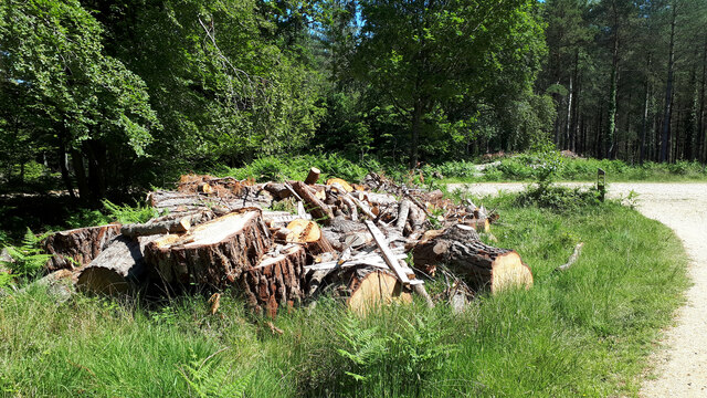 Forestry offcuts, Lodgehill Inclosure