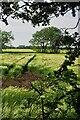 TA1944 : Wheat field near Grange Farm by David Lally