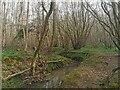 TQ5606 : Stream in Abbot's Wood by PAUL FARMER