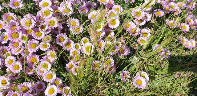 Flowers in Mundesley, Norfolk