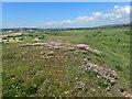 TV4699 : Sea pink near Seaford by Marathon