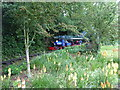 "TM0780 : Steam locomotive ""Alan Bloom"" on the Garden Railway, Bressingham by Chris Holifield"
