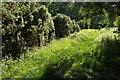 SX8475 : Path, Teigngrace Meadow by Derek Harper