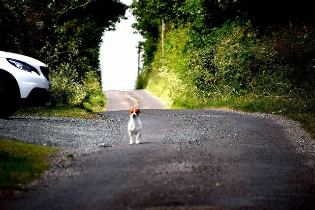 Cross wee dog, Tattyreagh Glebe