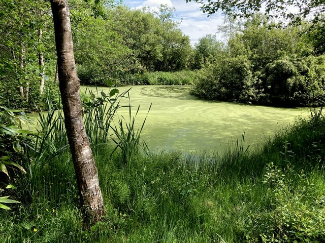 Small lake with algae, Tattyreagh Glebe