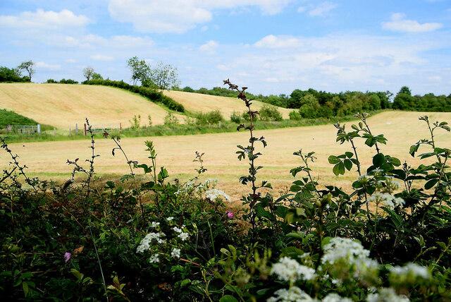 Cropped fields, Tattyreagh Glebe