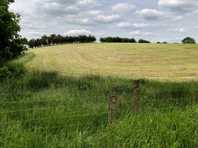 Corner of field left for wildlife, Tattyreagh Glebe