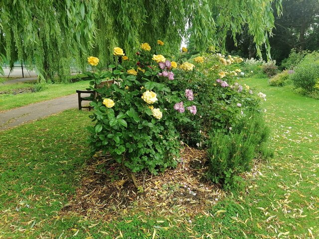 Rosebed in Northway Gardens, Hampstead Garden Suburb