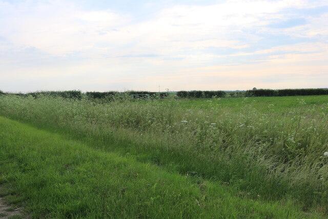 Field by Byall Fen Farm, Horseway