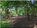 TF0820 : Woodland morning by Bob Harvey
