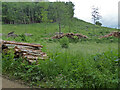 SO8101 : Woodchester Park - forestry in Colepark Wood by Chris Allen