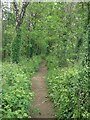 SS8978 : Permissive path in woodland by A48 underpass, Bridgend by eswales