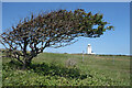 TR3543 : Windswept Tree and Lighthouse by Des Blenkinsopp