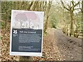 TQ1451 : Bagden Wood - Ash Tree Removal by Colin Smith
