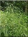 TF0820 : A mass of grass flowers by Bob Harvey
