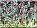 TQ0451 : Clandon Park - Grotto by Colin Smith