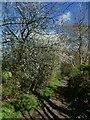 SE1838 : Footpath towards Dawson Wood by Stephen Craven