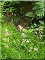 TF0820 : Dactylis glomerata - Pink with pollen by Bob Harvey
