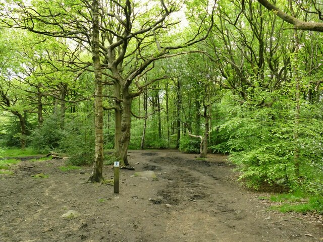 Bridleway through Buck Wood