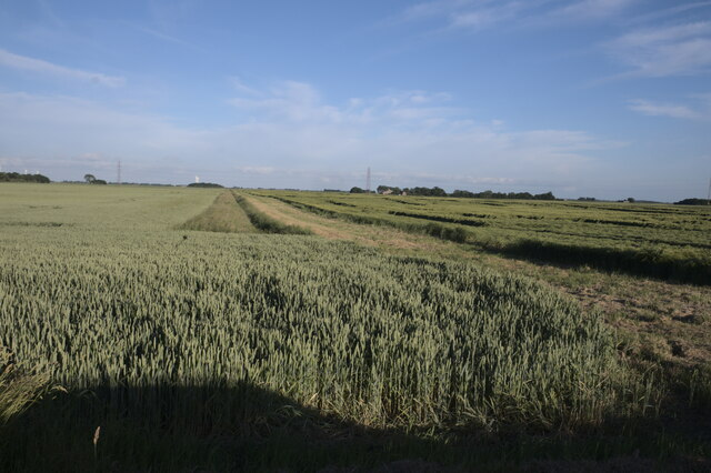 Fen drain, and beetle bank