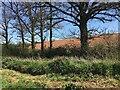 SP3863 : HS2 enabling works, Welsh Road area, April 2021 (4) by Robin Stott