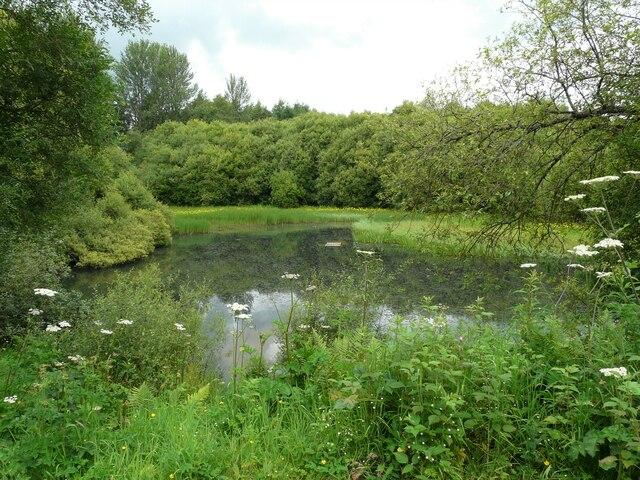 Pond, Doune Ponds