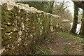 SX7963 : Deer park wall, Staverton Ford Plantation by Derek Harper