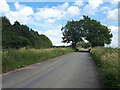 SP3015 : The road to Leafield passing Homefield Spinney by Vieve Forward