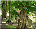 SE0188 : Fungus growing on a tree in Aysgarth Church by David Dixon
