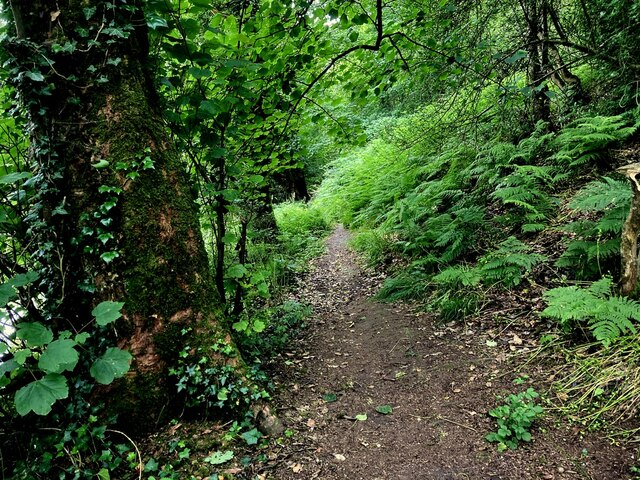 Overgrown path along the Camowen River